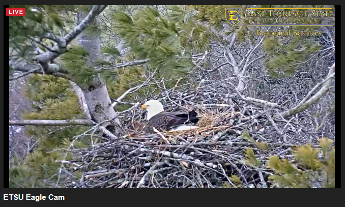 EagleCam screen grab