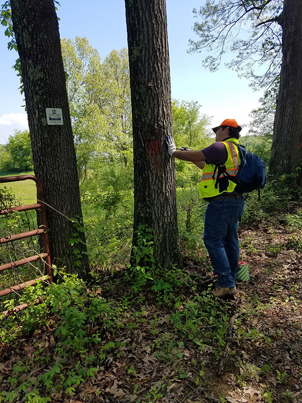 worker adding sign to tree