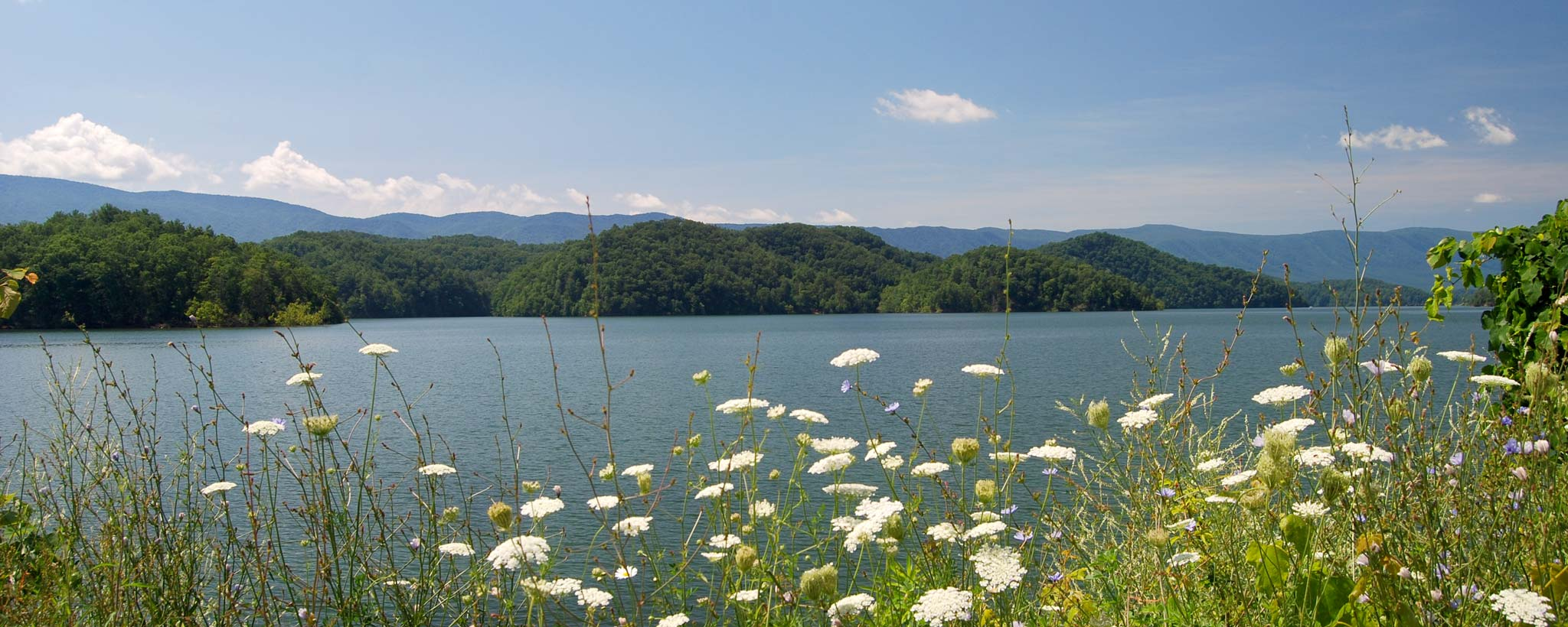 lake with flowers